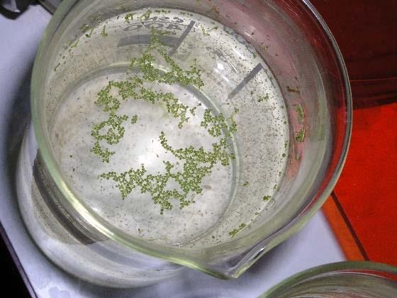 сульфатредуцирующие бактерии будут использоваться в ремонте трещин в бетоне